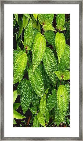 Forever Green Framed Print