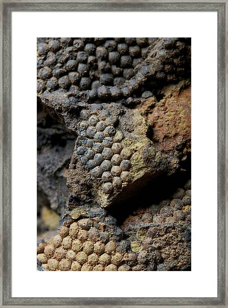 Fossil Algae Framed Print by Sinclair Stammers