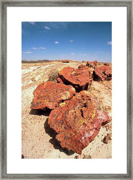 Fossilised Trees In Petrified Forest National Park Framed Print by Tony Craddock/science Photo Library