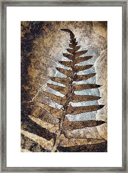 Fossilized Fern Framed Print