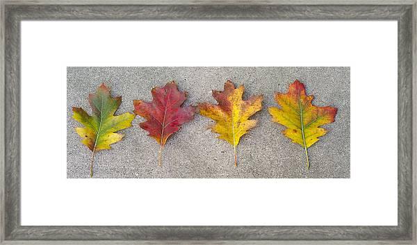 Four Autumn Leaves Framed Print