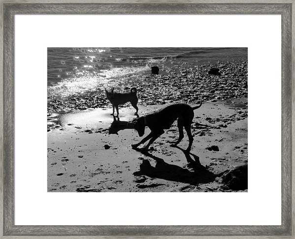 Dog Magic Framed Print