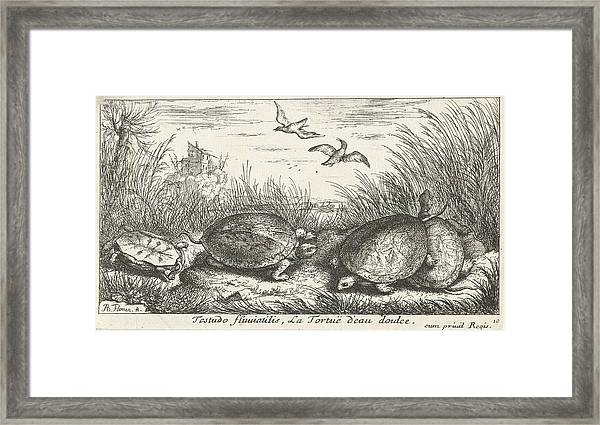 Four Freshwater Turtles Between Grass And Reed Framed Print