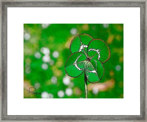 Four Leaf Clover Framed Print