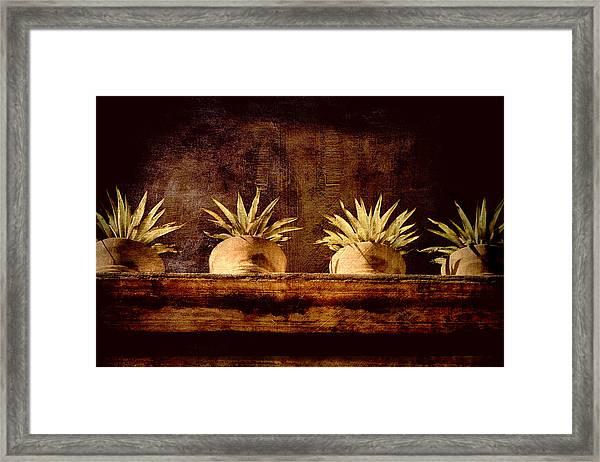 Four Potted Plants Framed Print