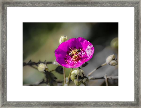 Fower And Bee Framed Print