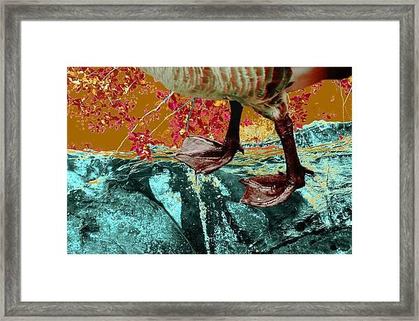 Fowl Weather Friend Framed Print