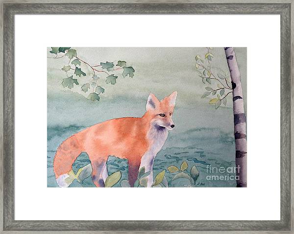 Fox And Birch Framed Print