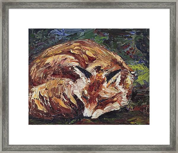 Fox Asleep Framed Print
