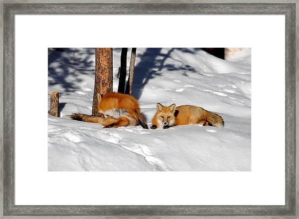 Foxty Couple 5 Framed Print