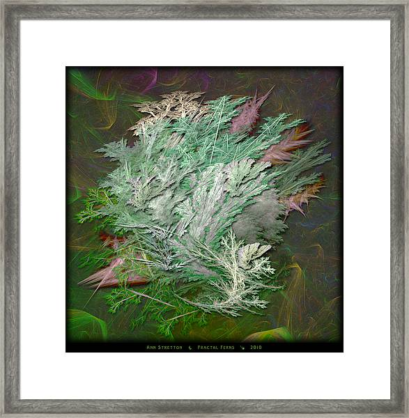 Fractal Ferns Framed Print