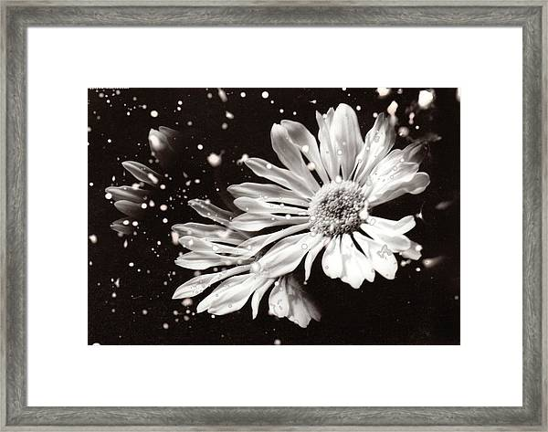 Fractured Daisy Framed Print