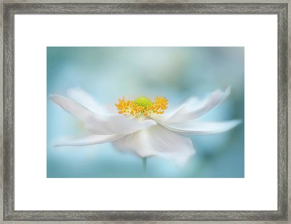 Fragility Framed Print by Jacky Parker