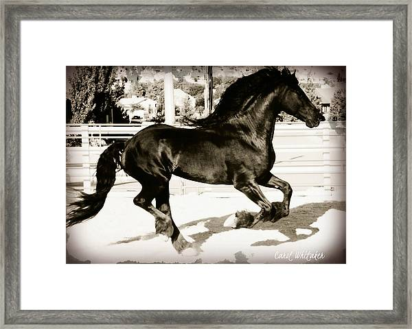 Free Running Framed Print