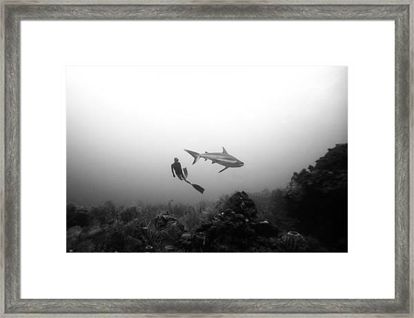 Cara A Cara Framed Print by One ocean One breath