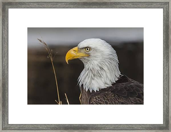 Freedom's Spirit Framed Print
