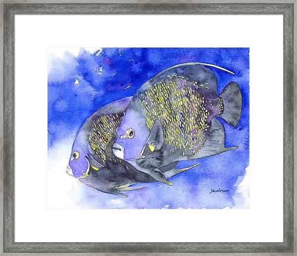 French Angelfish Framed Print
