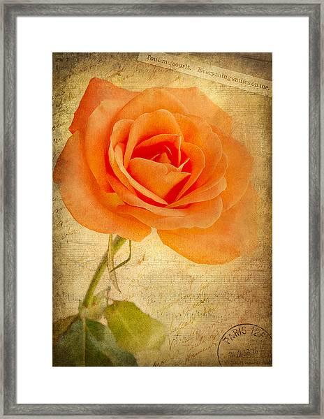 French Rose Framed Print