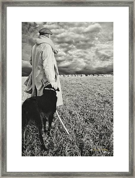 French Shepherd - B W Framed Print