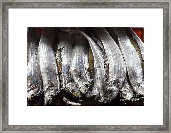 Fresh Ribbonfish For Sale In Taiwan Framed Print