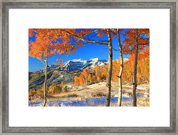 Fresh Snow In The Aspens. Framed Print