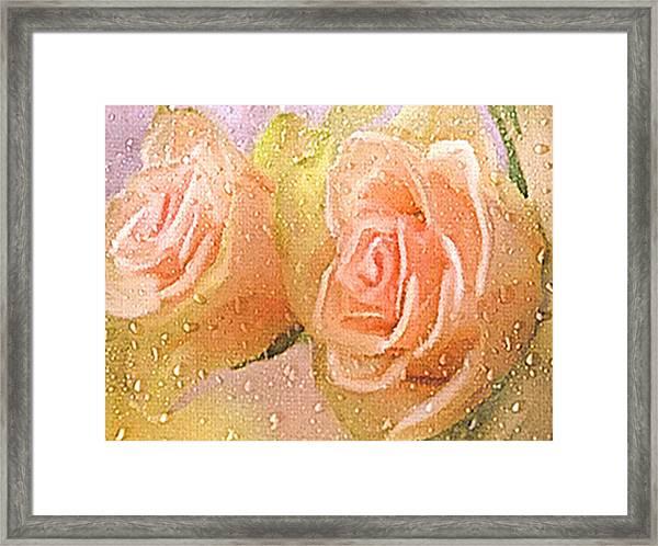Freshly Watered Roses Framed Print