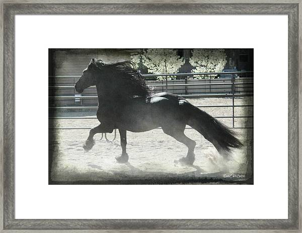 Friesian At Play Framed Print