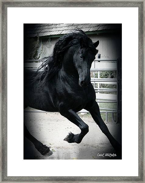 Friesian Magic Framed Print