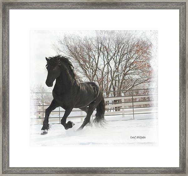 Friesian Stallion  Framed Print