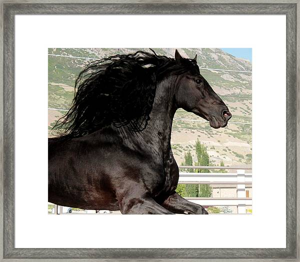 Friesian Stallion Spirit Framed Print