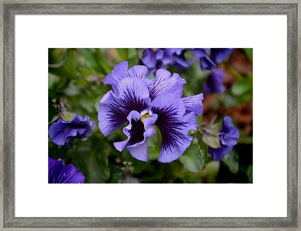 Frizzle Sizzle Blue Framed Print