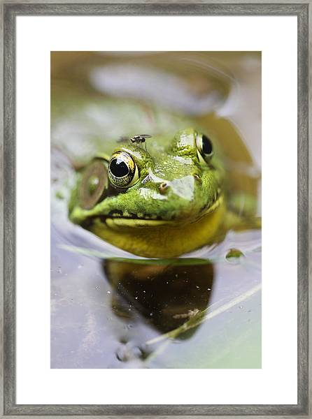 Frog And Fly Framed Print by Brian Magnier