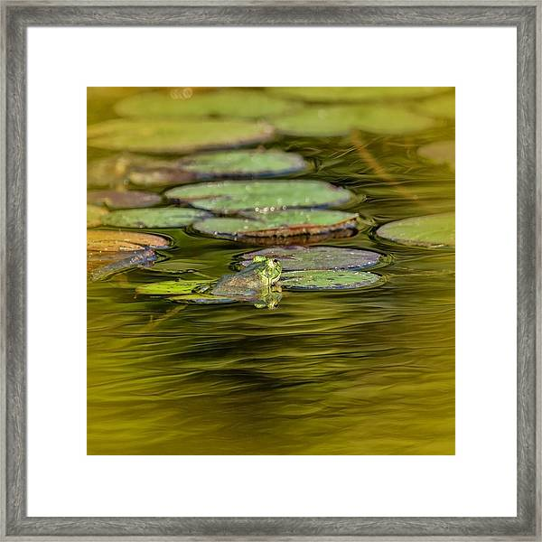 Frog And Lily Pad Framed Print