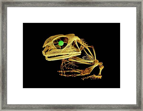 Frog Framed Print by Dan Sykes/natural History Museum, London