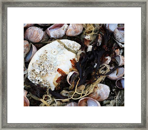 From The Ocean Framed Print