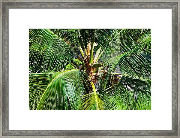 Fronds And Center Framed Print