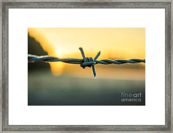 Frost On Barbed Wire At Sunrise Framed Print