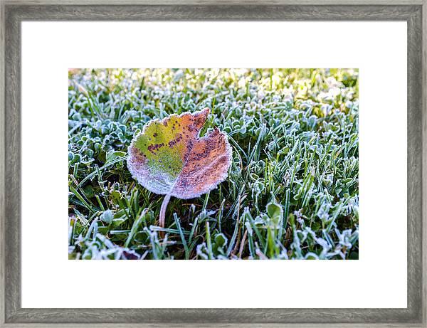 Frostbite Framed Print