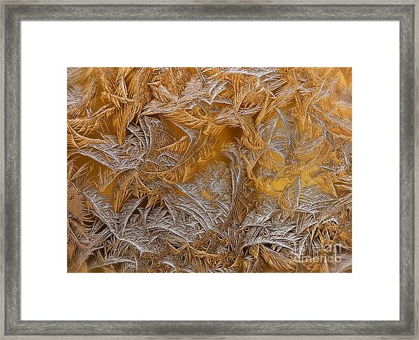 Frosted Filigree Framed Print