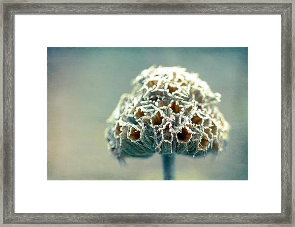 Frosted Seed Head Framed Print by Julie Hill