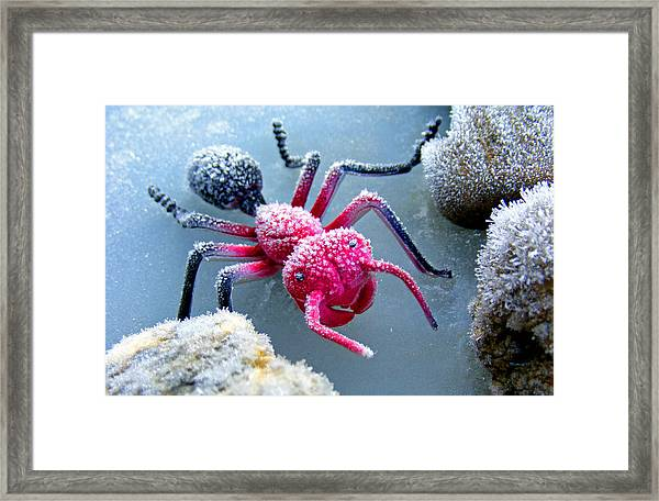 Frosty Ant In Winter Framed Print
