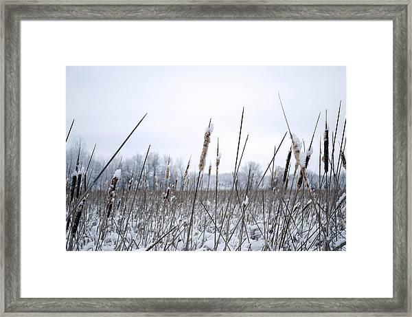 Frosty Cattails Framed Print