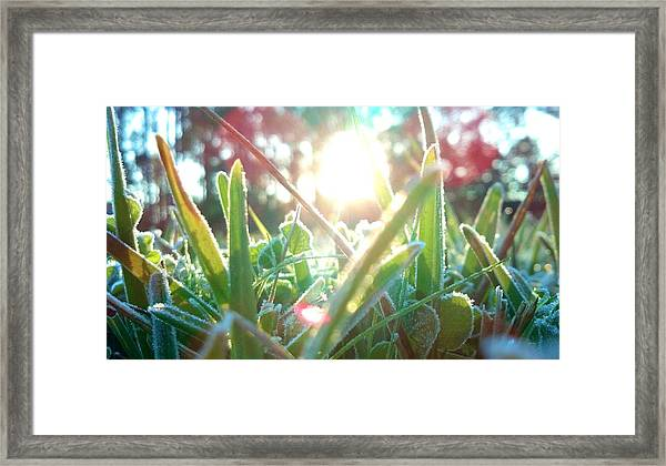 Frosty Flare Framed Print