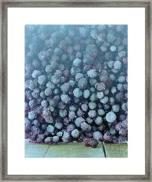 Frozen Blueberries Framed Print