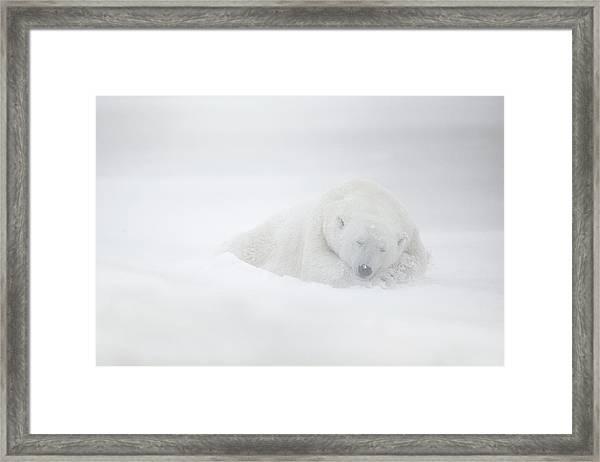 Frozen Dreams Framed Print by Marco Pozzi