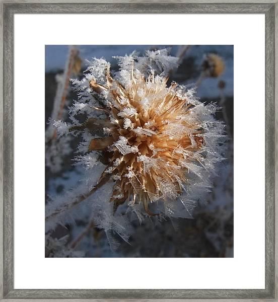 Frozen Fog Framed Print