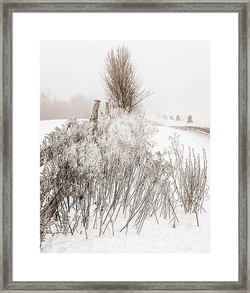 Frozen Fog On A Hedgerow - Bw Framed Print
