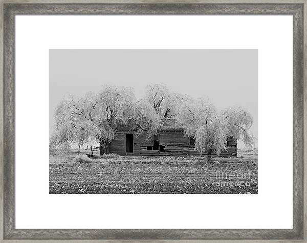 Framed Print featuring the photograph Frozen Trees In Black And White by Mae Wertz