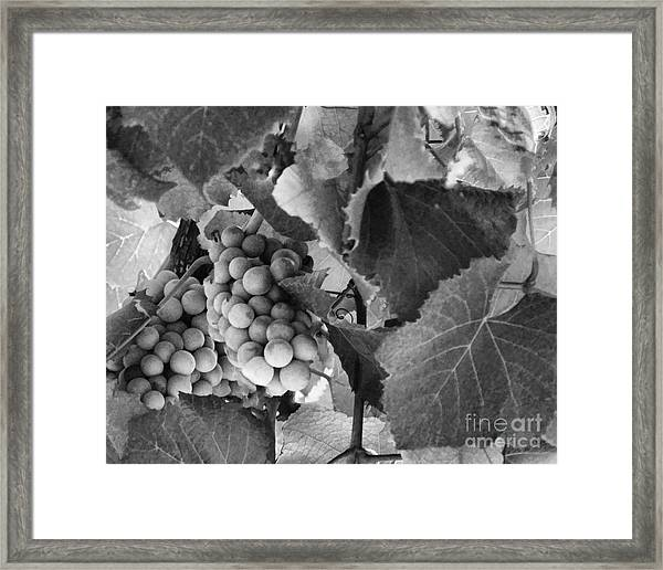 Fruit -grapes In Black And White - Luther Fine Art Framed Print