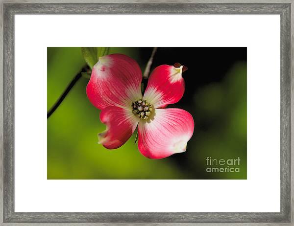 Fruit Tree Flower Framed Print
